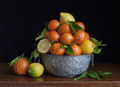 Still life with lemons, oranges and a grapefruit / Charlotte Fröling