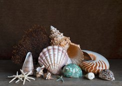 Still life with exotic shells, coral and a starfish / Charlotte Fröling