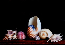 Still life with exotic shells and a sea urchin / Charlotte Fröling